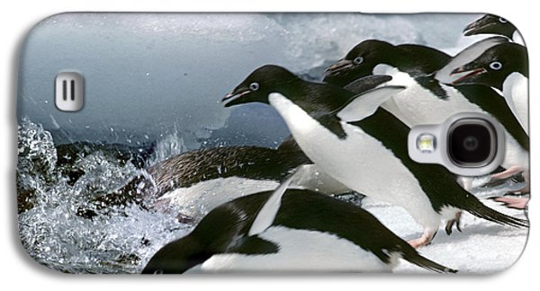 Adelie Penguins Galaxy S4 Case by Art Wolfe