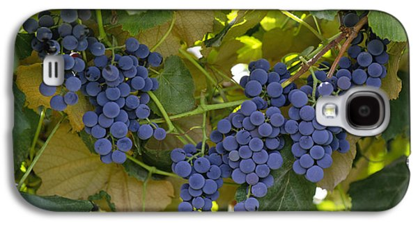 Concord Grapes Galaxy S4 Cases - Agriculture - Concord Tablejuice Grapes Galaxy S4 Case by Gary Holscher