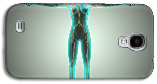 Physiology Galaxy S4 Cases - Anatomy Of Female Body With Arteries Galaxy S4 Case by Stocktrek Images