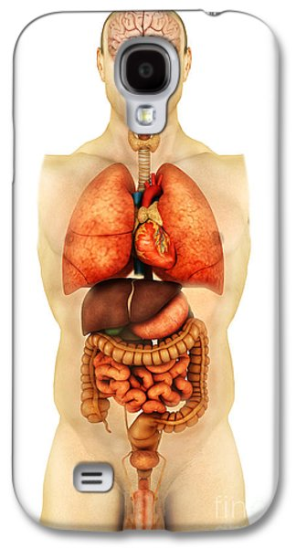 Internal Organs Galaxy S4 Cases - Anatomy Of Human Body Showing Whole Galaxy S4 Case by Stocktrek Images