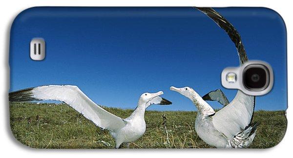 Wildlife Celebration Galaxy S4 Cases - Antipodean Albatross Courtship Display Galaxy S4 Case by Tui De Roy