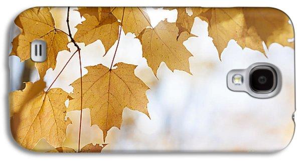 Maple Season Galaxy S4 Cases - Backlit maple leaves in fall Galaxy S4 Case by Elena Elisseeva