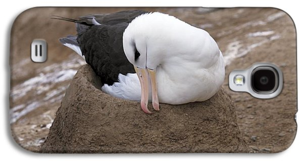 Mud Nest Galaxy S4 Cases - Black-browed Albatross Nesting Galaxy S4 Case by Charlotte Main