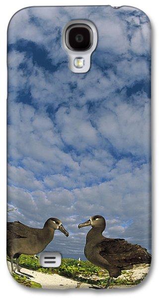 Wildlife Celebration Galaxy S4 Cases - Black-footed Albatross Courtship Dance Galaxy S4 Case by Tui De Roy