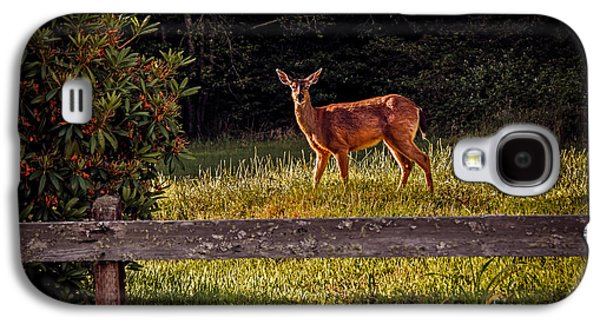 Haybale Galaxy S4 Cases - Blacktail Doe Galaxy S4 Case by Robert Bales