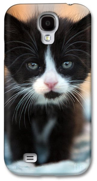 Animal Photographs Galaxy S4 Cases - Blake and white Kitten Galaxy S4 Case by Iris Richardson