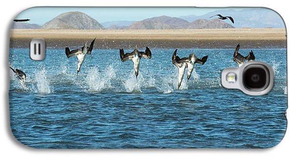 Blue-footed Boobies Feeding Galaxy S4 Case by Christopher Swann