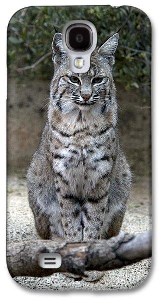 Lynx Rufus Galaxy S4 Cases - Bobcat Galaxy S4 Case by Mark Newman