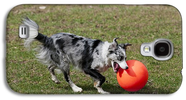 Dog Playing Ball Galaxy S4 Cases - Border Collie Chasing Ball Galaxy S4 Case by William H. Mullins