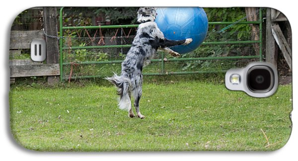Border Collie Playing Catch Galaxy S4 Case by William H. Mullins