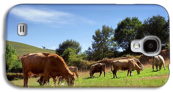 Pasture Scenes Photographs Galaxy S4 Cases - Bovine Cattle  Galaxy S4 Case by Carlos Caetano