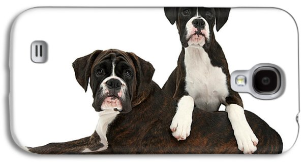 Boxer Puppy Galaxy S4 Cases - Boxer Pups Galaxy S4 Case by Mark Taylor