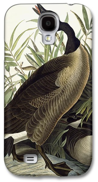 Feather Drawings Galaxy S4 Cases - Canada Goose Galaxy S4 Case by John James Audubon