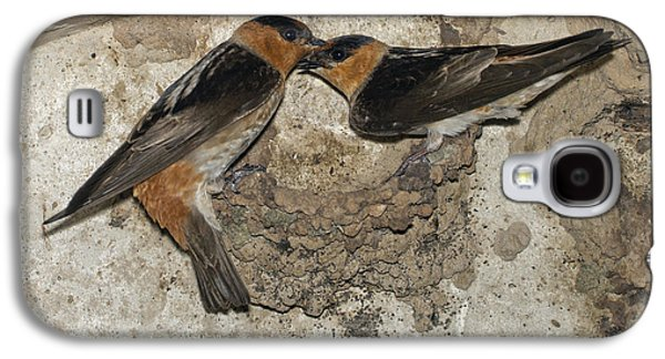 Mud Nest Galaxy S4 Cases - Cave Swallows Galaxy S4 Case by Anthony Mercieca