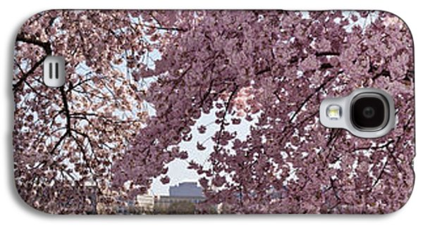 Cherry Blossoms Galaxy S4 Cases - Cherry Blossom Trees In Bloom Galaxy S4 Case by Panoramic Images