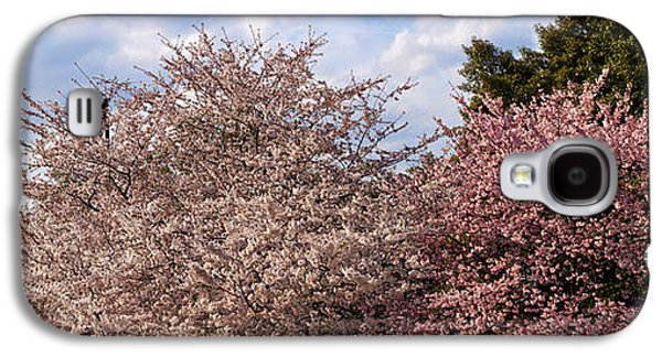 Cherry Blossoms Galaxy S4 Cases - Cherry Blossom Trees In Full Bloom Galaxy S4 Case by Panoramic Images