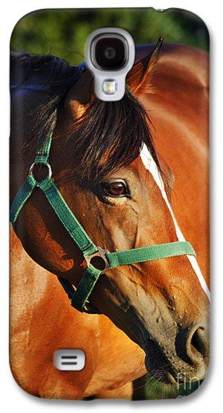 Green Pyrography Galaxy S4 Cases - Chestnut horse Galaxy S4 Case by Jelena Jovanovic