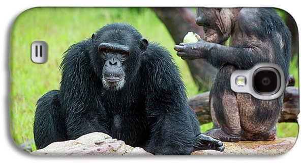 Chimpanzees Galaxy S4 Case by Pan Xunbin
