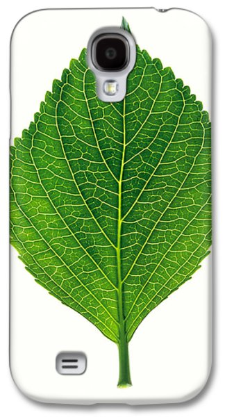 Green Galaxy S4 Cases - Close Up Of Green Leaf On Light Grey Galaxy S4 Case by Panoramic Images