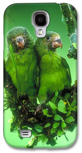 Cobalt-winged Parakeets Galaxy S4 Case by Art Wolfe