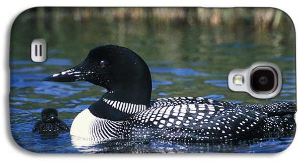 Loon Galaxy S4 Cases - Common Loon Galaxy S4 Case by Mark Newman
