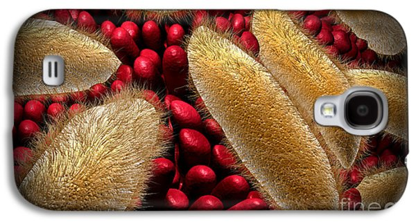 Unicellular Galaxy S4 Cases - Conceptual Image Of Paramecium Galaxy S4 Case by Stocktrek Images