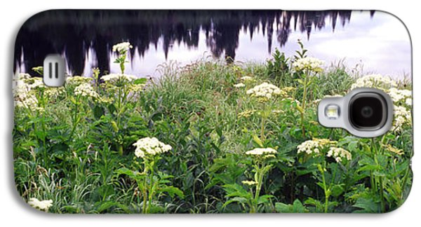 Pond In Park Galaxy S4 Cases - Cow Parsnip Heracleum Maximum Flowers Galaxy S4 Case by Panoramic Images