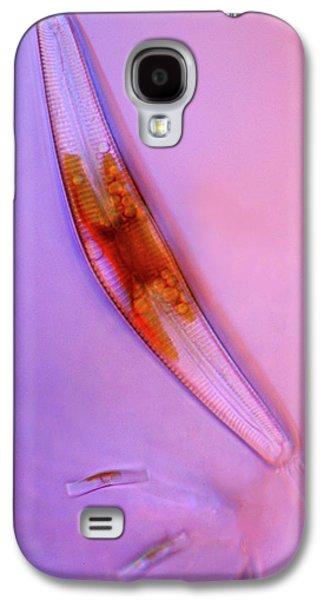 Cymbella Diatom Galaxy S4 Case by Marek Mis