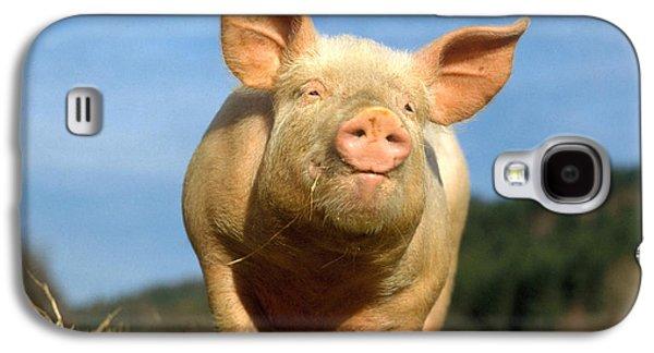 Barn Yard Galaxy S4 Cases - Domestic Pig Galaxy S4 Case by Hans Reinhard