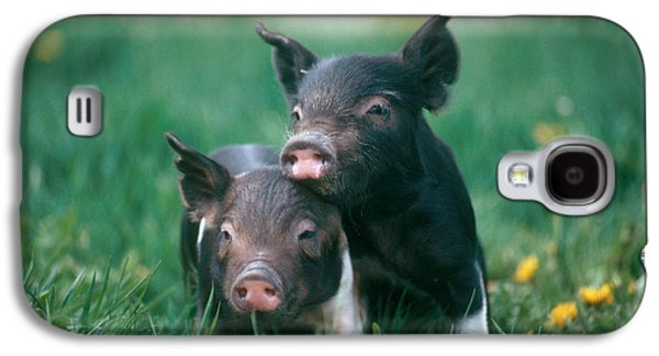 Domestic Piglets Galaxy S4 Case by Alan Carey