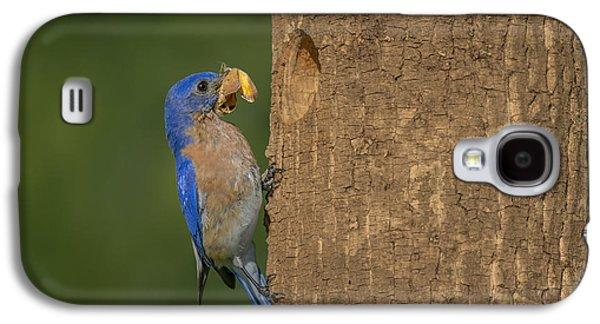 Eastern Bluebird  Galaxy S4 Case by Susan Candelario
