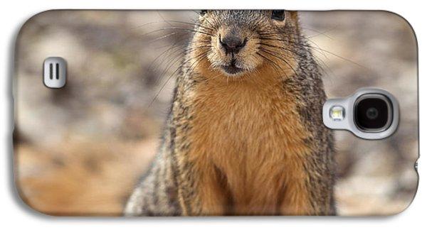 Fox Squirrel Galaxy S4 Cases - Eastern Fox Squirrel Galaxy S4 Case by Brandon Alms