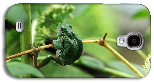 Anurans Galaxy S4 Cases - European Treefrog Galaxy S4 Case by Reiner Bernhardt