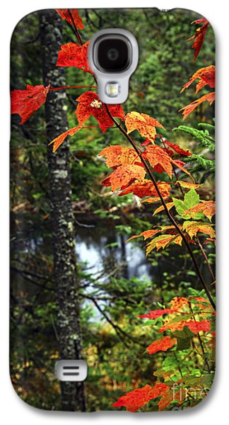 Creek Galaxy S4 Cases - Fall forest and river Galaxy S4 Case by Elena Elisseeva