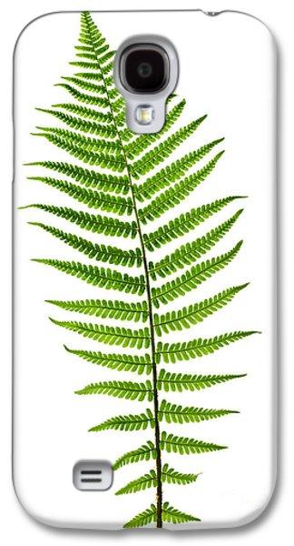Ferns Galaxy S4 Cases - Fern leaf Galaxy S4 Case by Elena Elisseeva