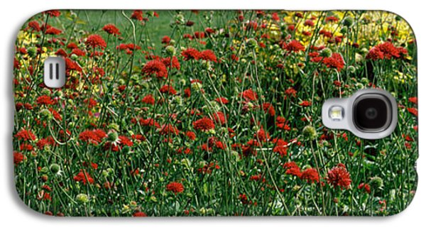 Botanical Galaxy S4 Cases - Flowers In A Botanical Garden, Buffalo Galaxy S4 Case by Panoramic Images