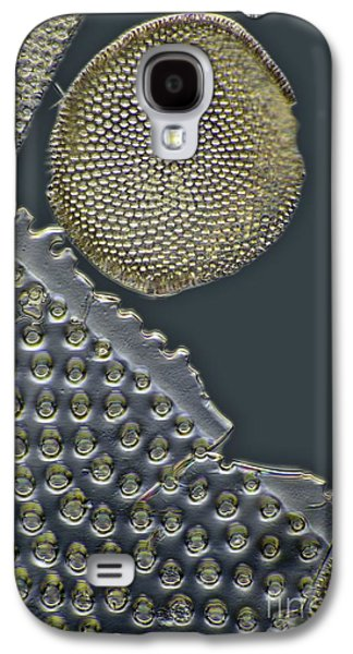 Striae Galaxy S4 Cases - Fossil Diatoms, Light Micrograph Galaxy S4 Case by Frank Fox