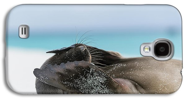 Galapagos Sea Lion Pup Covering Face Galaxy S4 Case by Tui De Roy