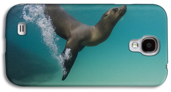 Galapagos Sea Lion Swimming Ecuador Galaxy S4 Case by Pete Oxford