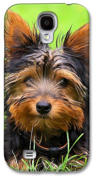 Dog Galaxy S4 Cases - Hello Toby Galaxy S4 Case by Angela Doelling AD DESIGN Photo and PhotoArt