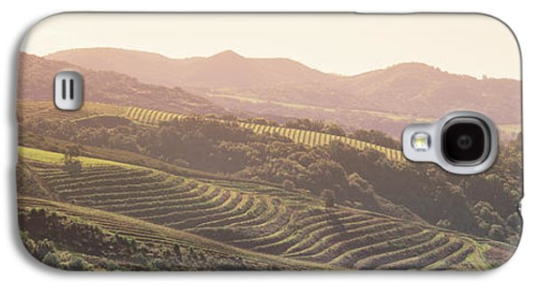 Sonoma County Vineyards. Galaxy S4 Cases - High Angle View Of A Vineyard Galaxy S4 Case by Panoramic Images