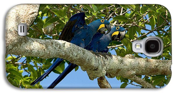 Hyacinth Macaws, Brazil Galaxy S4 Case by Gregory G. Dimijian, M.D.
