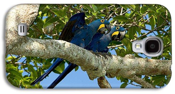 Hyacinth Macaws, Brazil Galaxy S4 Case by Gregory G. Dimijian, M.D.