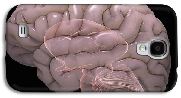 Internal Organs Galaxy S4 Cases - Internal Brain Anatomy Galaxy S4 Case by Science Picture Co