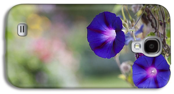 Climbing Galaxy S4 Cases - Ipomoea Morning Glory Galaxy S4 Case by Tim Gainey