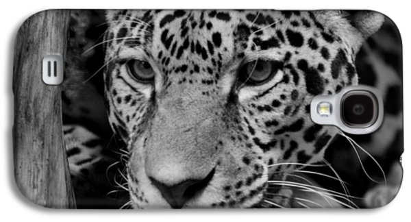 Jaguar In Black And White II Galaxy S4 Case by Sandy Keeton