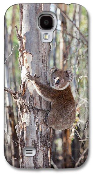 Koala Bear Galaxy S4 Case by Ashley Cooper