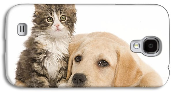Mixed Labrador Retriever Galaxy S4 Cases - Labrador And Forest Cat Galaxy S4 Case by Jean-Michel Labat