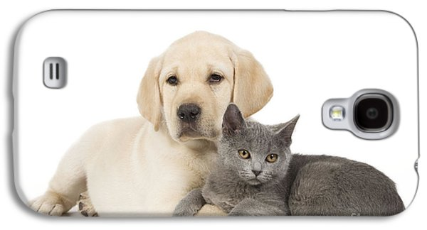 Mixed Labrador Retriever Galaxy S4 Cases - Labrador Puppy With Chartreux Kitten Galaxy S4 Case by Jean-Michel Labat