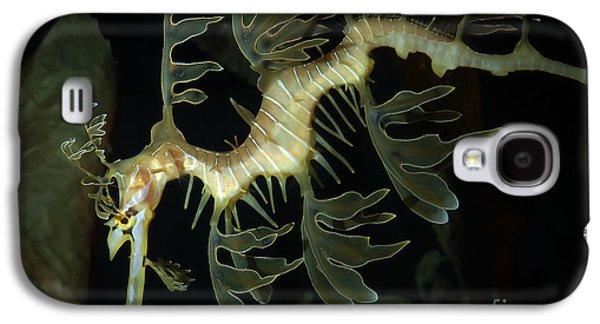 Leafy Sea Dragon Galaxy S4 Cases - Leafy Seadragon Galaxy S4 Case by Gregory G. Dimijian